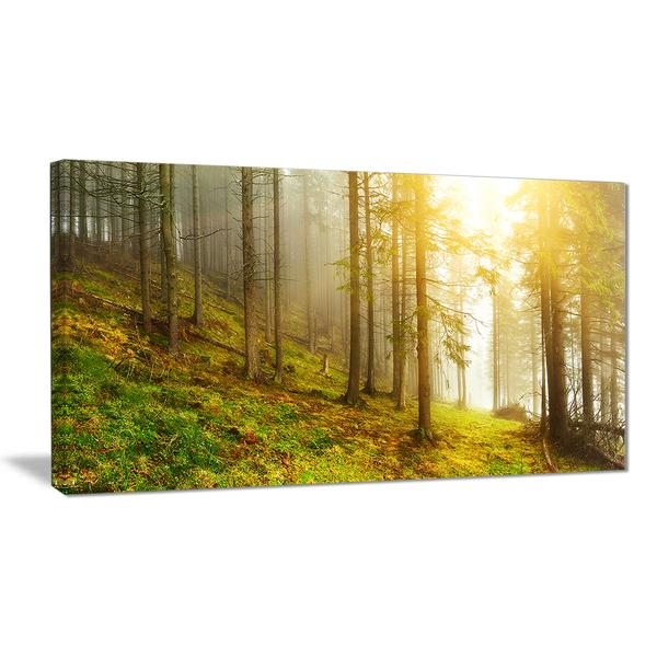 Sunny Forest Landscape Canvas Wall Art Print – Accent Canvas