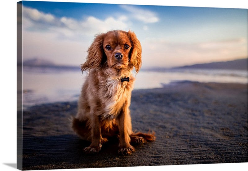 Beach Pup Canvas Wall Art Print