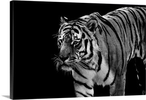 Beautiful Tiger Canvas Wall Art Print