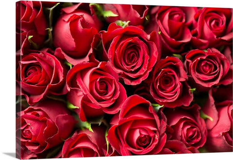Bed of Roses Canvas Wall Art Print