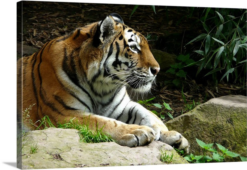 Big Cat Predator Canvas Wall Art Print