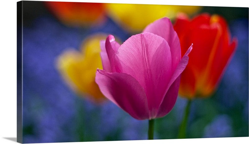 Blooming Bright Tulips Canvas Wall Art Print