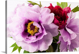 Blooming Peony Canvas Wall Art Print