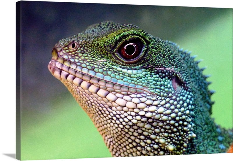 Chinese Water Dragon Canvas Wall Art Print