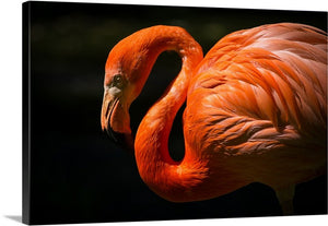 Close Up Flamingo Canvas Wall Art Print