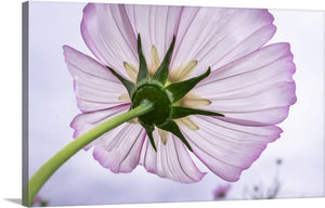 Cosmos Flower Canvas Wall Art Print
