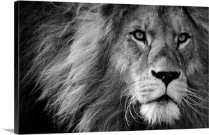 Dangerous Lion Canvas Wall Art Print
