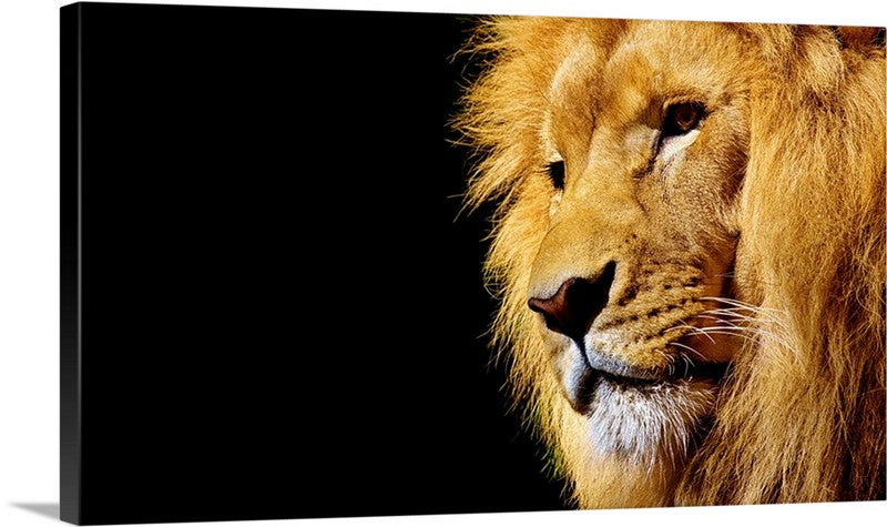 Deadly Lion Canvas Wall Art Print