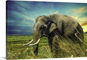 Elephant On the Move Canvas Wall Art Print