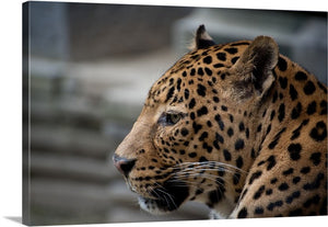 Fierce Leopard Canvas Wall Art Print
