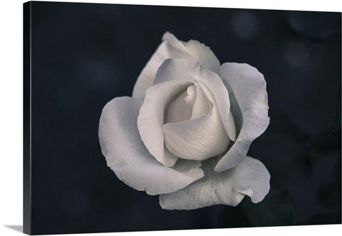 Flowering Rose Canvas Wall Art Print