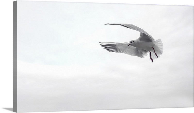 Flying Gull Canvas Wall Art Print