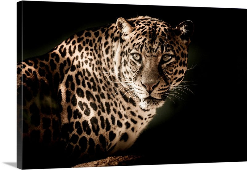 Focused Leopard Canvas Wall Art Print