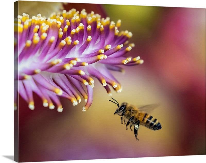Honeybee Blur Canvas Wall Art Print