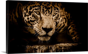 Jaguar on the Hunt Canvas Wall Art Print