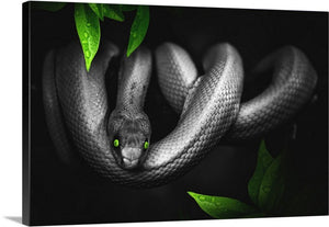 Jungle Snake Canvas Wall Art Print