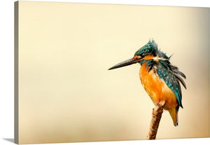 Kingfisher Feathers Canvas Wall Art Print
