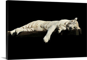 Lazy Tiger Canvas Wall Art Print