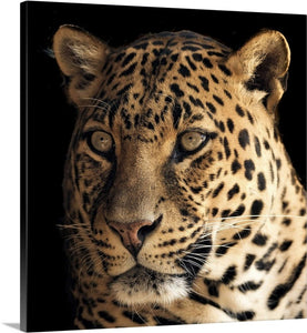 Leopard Stare Canvas Wall Art Print