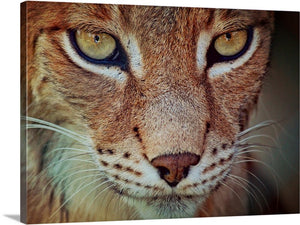 Look into My Eyes Canvas Wall Art Print