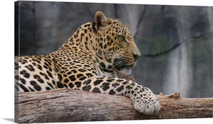 Noble Leopard Canvas Wall Art Print