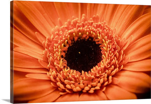 Orange Blooming Flower Canvas Wall Art Print