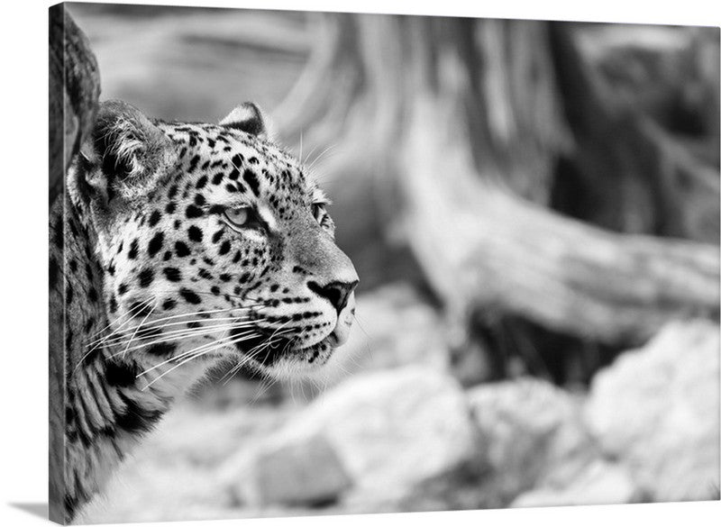 Persian Leopard Canvas Wall Art Print