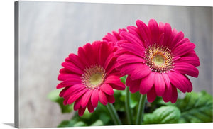 Pink Gerbera Canvas Wall Art Print