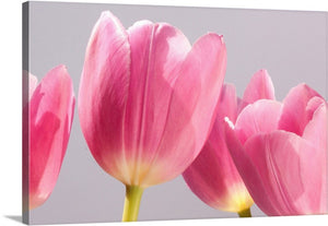 Pretty in Pink Tulips II Canvas Wall Art Print