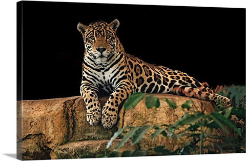 Resting Wild Cat Canvas Wall Art Print