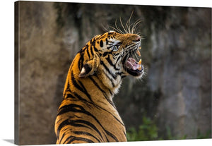 Roaring Tiger Canvas Wall Art Print