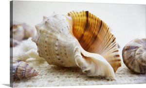 Seashell Beauty Canvas Wall Art Print