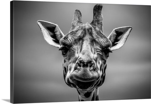 Staring Giraffe Canvas Wall Art Print