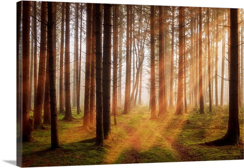 Sunbeam Forest Canvas Wall Art Print