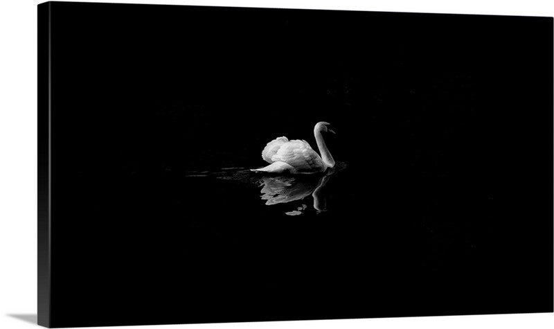 Swan Reflection Canvas Wall Art Print