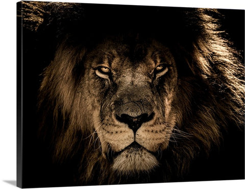 Wild African Lion Canvas Wall Art Print