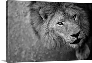 Wild Beast Canvas Wall Art Print