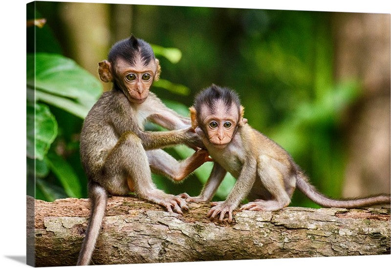 Young Monkey Love Canvas Wall Art Print