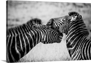 Zebra Crush Canvas Wall Art Print