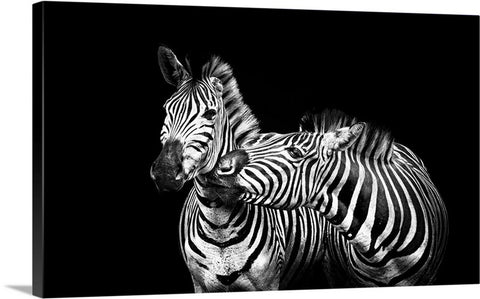Zebra Love Canvas Wall Art Print