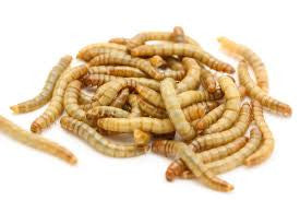 2,000 Meal Worms