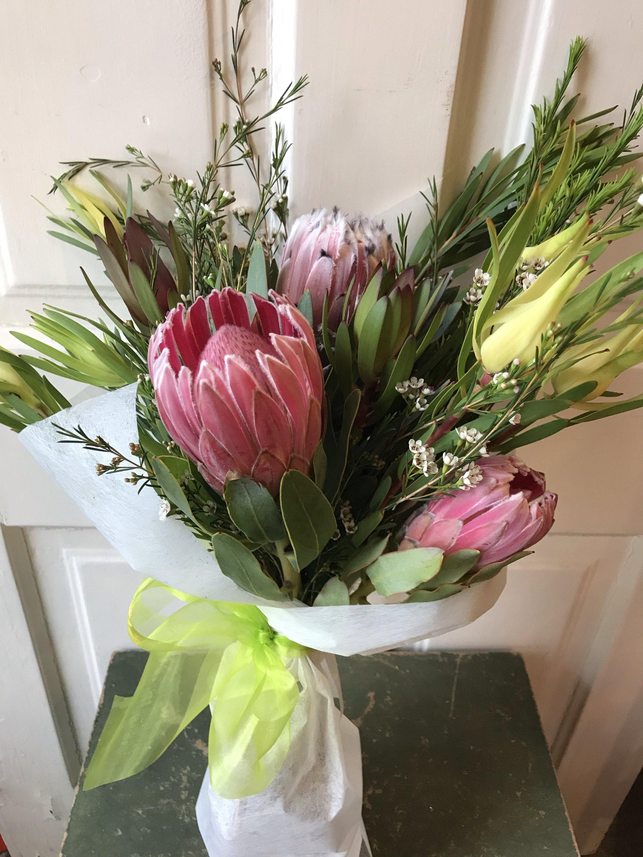 protea perfection