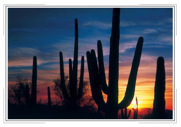 2019 Arizona Pocket Calendar