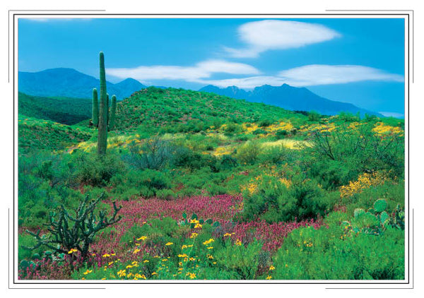 2019 Desert Southwest Pocket Calendar