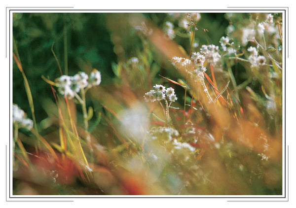 2020 Desert Wildflowers Pocket Calendar