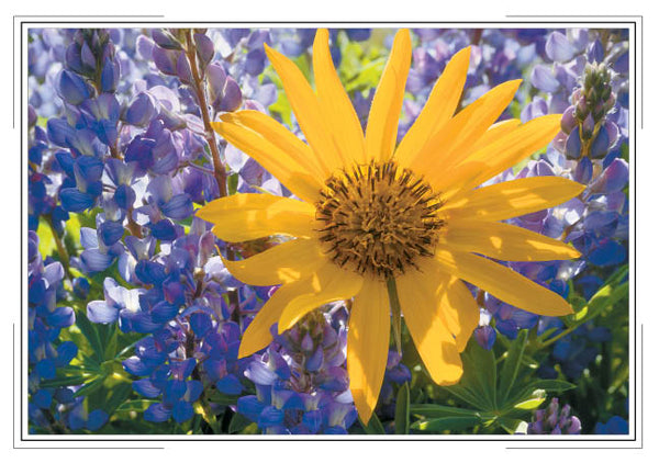 2019 Desert Wildflowers Pocket Calendar