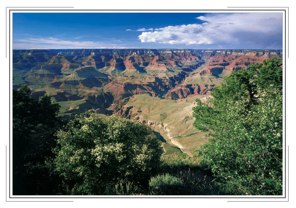 2019 Grand Canyon Pocket Calendar