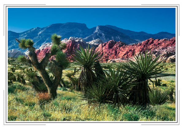 2020 Nevada Pocket Calendar