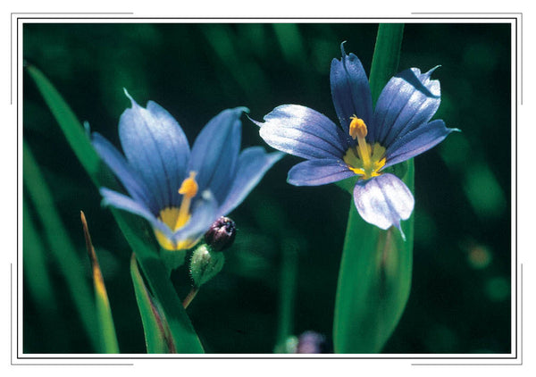 2020 Wildflowers Pocket Calendar