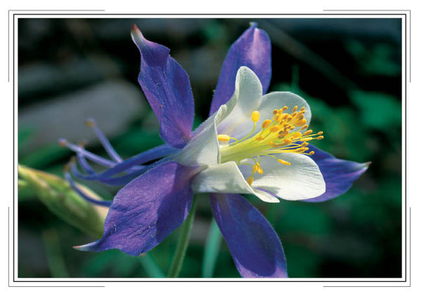 2019 Wildflowers Pocket Calendar